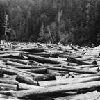 caspar-lumber