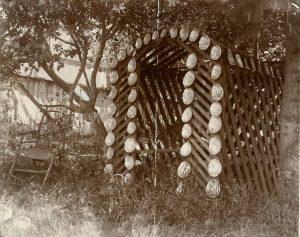 11-3-abalone-photo